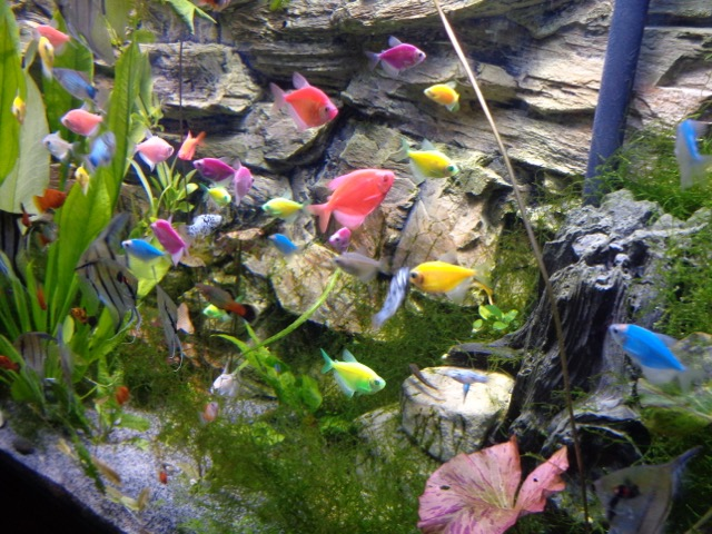 The really colorful fish. They are really pretty!