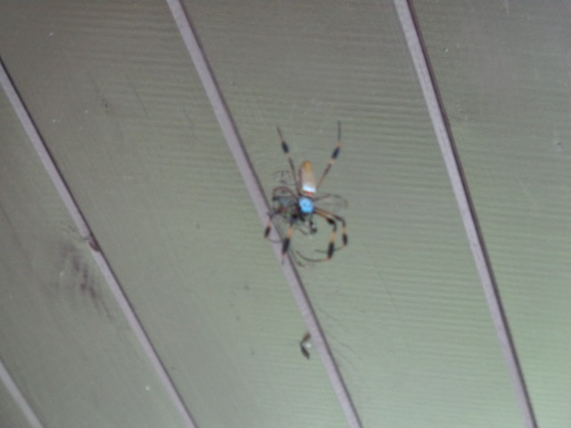 We found this huge spider well hiking. Its freaky!
