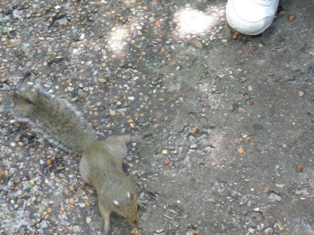 This is the squirrel that Eli befriended.