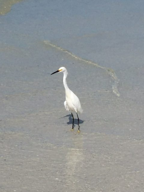 This was a cool bird we saw. I think its a Snowy Egret.
